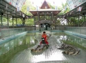 ферма крокодилов в Паттайе